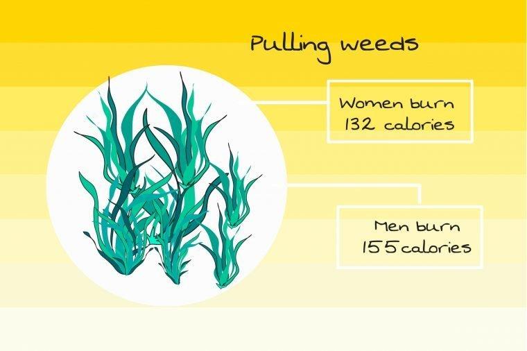 caloric burn while pulling weeds
