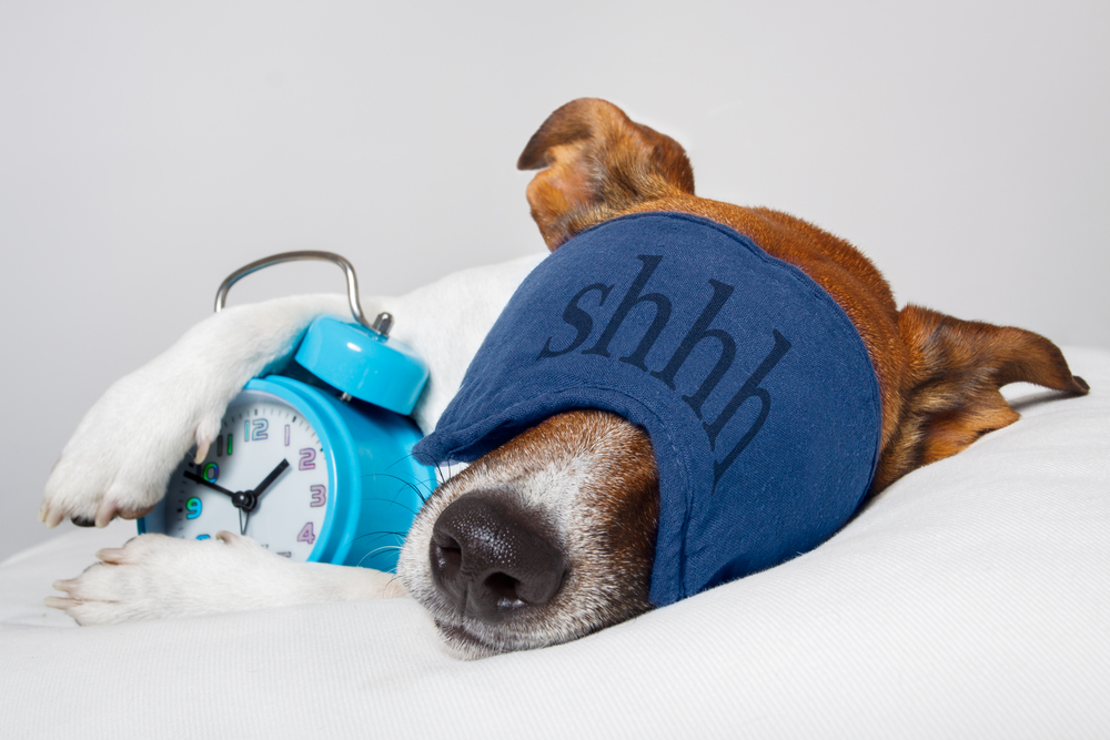 A dog is sleeping with an alarm clock and a sleep mask